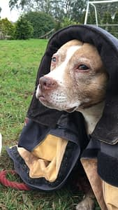 how-remote-healing-can-help-animals-pippa