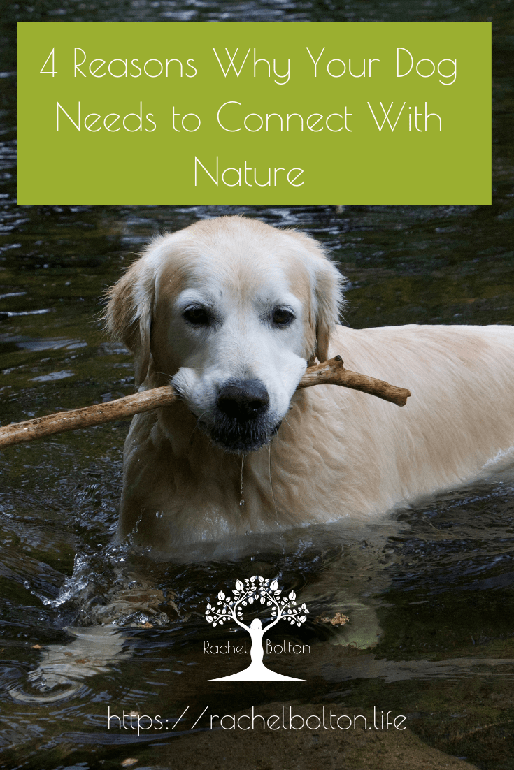 Four Reasons why your dog needs to connect with nature