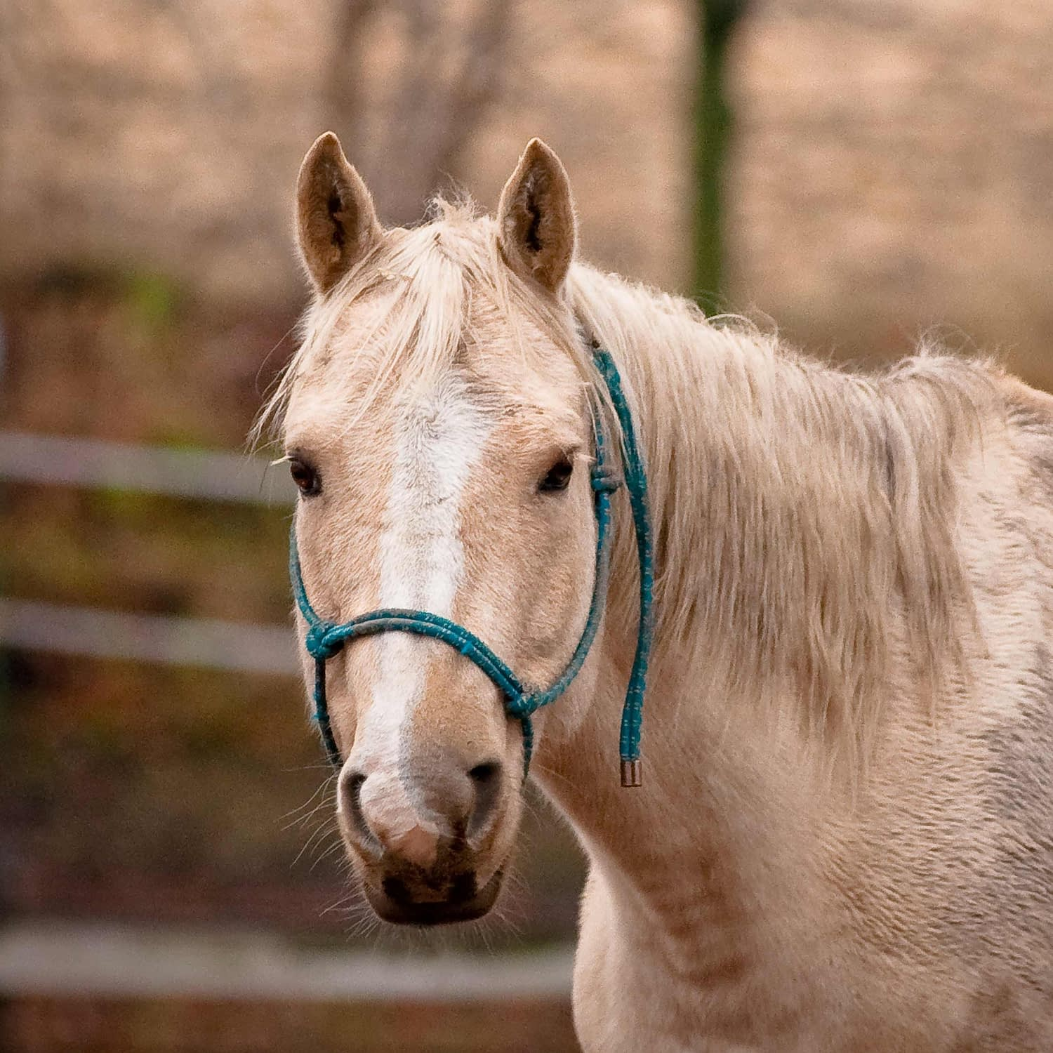 Remote Healing for Horses